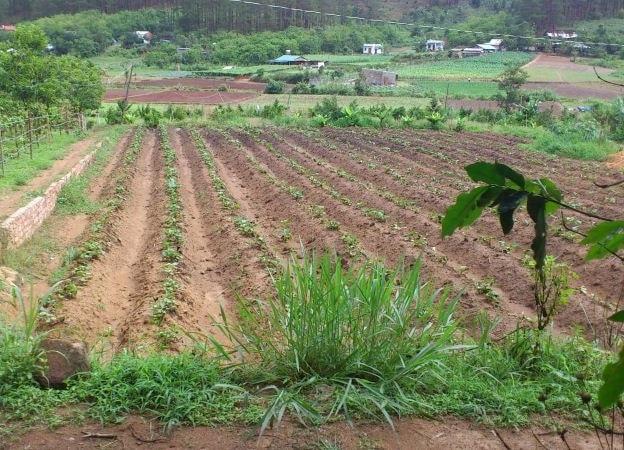 Đất trồng cây lâu năm và trồng cây hang năm khác nhau thế nào