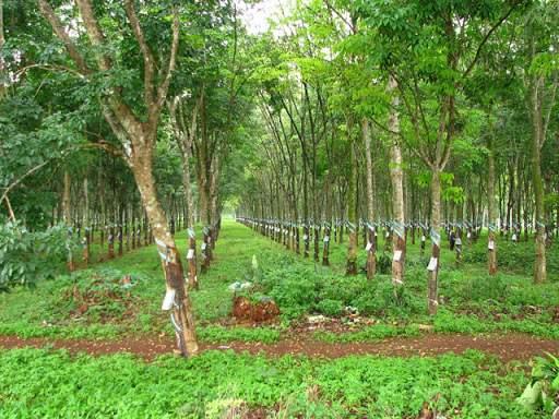 Thủ tục chuyển đất trồng cây lâu năm sang mục đích khác